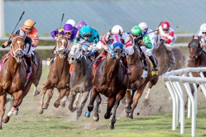 United Nations Stakes Quick Picks